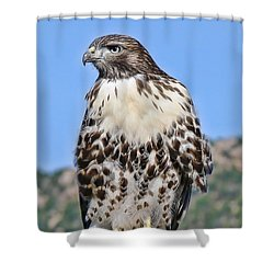 Red Tail Hawk Youth Shower Curtain by Jennie Marie Schell