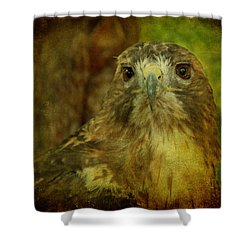 Red-tailed Hawk II Shower Curtain by Sandy Keeton
