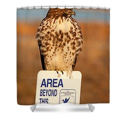 Red Tailed Hawk Lower Klamath National Wildlife Refuge Northern California Shower Curtain by Ram Vasudev