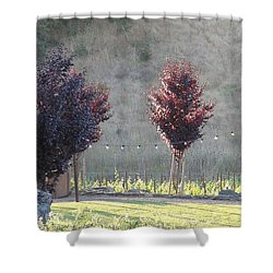 Red Tree's Shower Curtain by Shawn Marlow