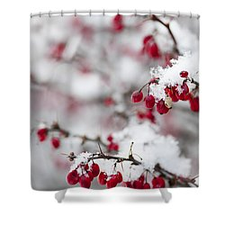 Red Winter Berries Under Snow Shower Curtain by Elena Elisseeva