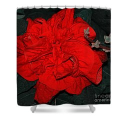 Red Winter Rose Shower Curtain by Kathleen Struckle