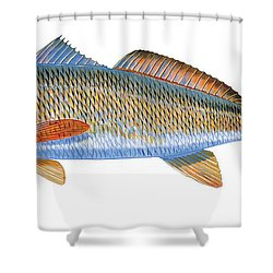 Redfish Shower Curtain by Carey Chen