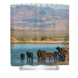 Rest Stop Shower Curtain by Tammy Espino