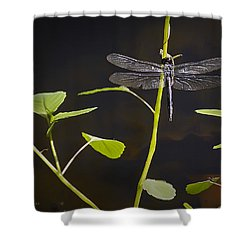 Resting Dragon Shower Curtain by Brian Wallace