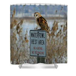 Resting Owl Shower Curtain by Marty Fancy