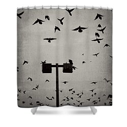 Revenge Of The Birds Shower Curtain by Trish Mistric