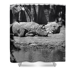 Rhino Nap Time Shower Curtain by Thomas Woolworth