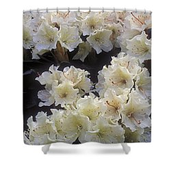 Rhododendrons Shower Curtain by Anonymous