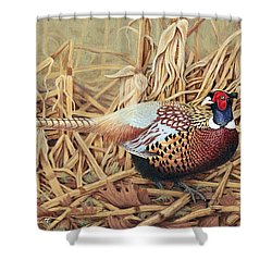Ring-necked Pheasant Shower Curtain by Ken Everett