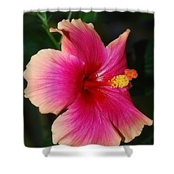 Rise And Shine - Hibiscus Face Shower Curtain by Connie Fox