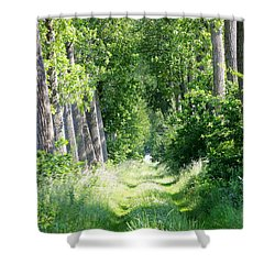 Road To Bruges Shower Curtain by Carol Groenen