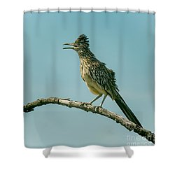 Roadrunner Out On A Limb Shower Curtain by Robert Frederick