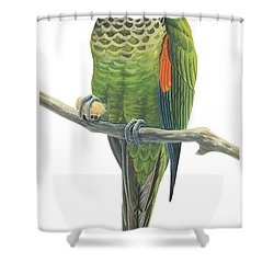 Rock Parakeet Shower Curtain by Anonymous