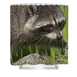 Rocky Raccoon Shower Curtain by Sharon Talson