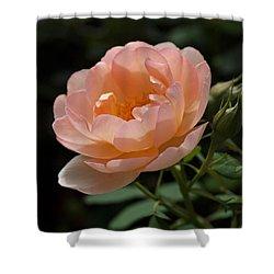 Rose Blush Shower Curtain by Rona Black