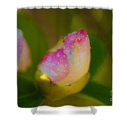 Rose Bud Shower Curtain by Cheryl Young