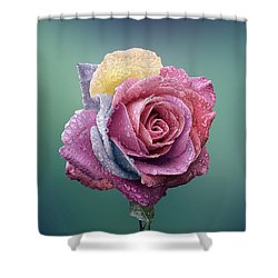 Rose Colorful Shower Curtain by Bess Hamiti