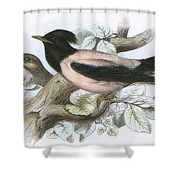 Rose Coloured Starling Shower Curtain by English School