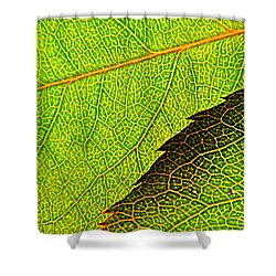 Rose Foliage Number Two Shower Curtain by Chris Berry