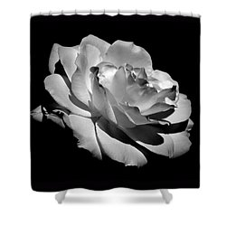 Rose Shower Curtain by Rona Black