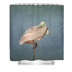Roseate Spoonbill Shower Curtain by Kim Hojnacki