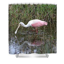 Roseate Spoonbill Reflection Shower Curtain by Carol Groenen