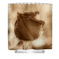 Rosebud Sepia Tone Shower Curtain by Cheryl Young