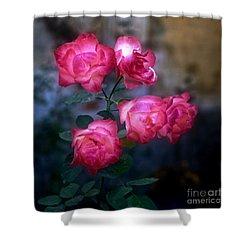 Roses II Shower Curtain by Silvia Ganora