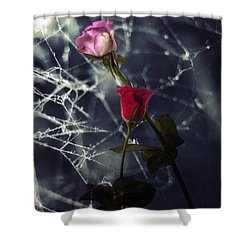 Roses With Coweb Shower Curtain by Joana Kruse