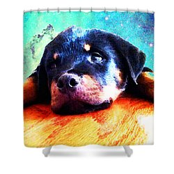 Rottie Puppy By Sharon Cummings Shower Curtain by Sharon Cummings
