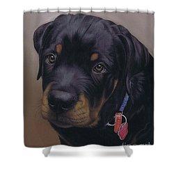 Rottweiler Dog Shower Curtain by Karie-Ann Cooper