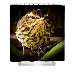 Round Warbler Shower Curtain by Karen Wiles