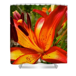 Royal Sunset Lily Shower Curtain by Jacqueline Athmann