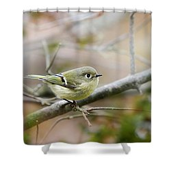 Ruby-crowned Kinglet Shower Curtain by Christina Rollo