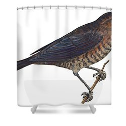 Rusty Blackbird  Shower Curtain by Anonymous