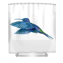 Sabrewing Hummingbird Shower Curtain by Amy Kirkpatrick