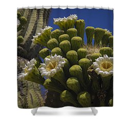 Saguaro Cactus Flowers Shower Curtain by Penny Lisowski