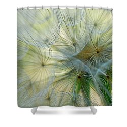 Salsifis D'orient Shower Curtain by Elaine Manley