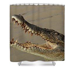 Salt Water Crocodile 1 Shower Curtain by Bob Christopher