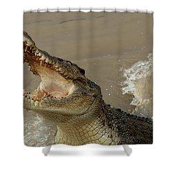 Salt Water Crocodile 2 Shower Curtain by Bob Christopher