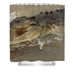Saltwater Crocodile Shower Curtain by Bob Christopher