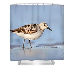 Sanderling Shower Curtain by Clarence Holmes