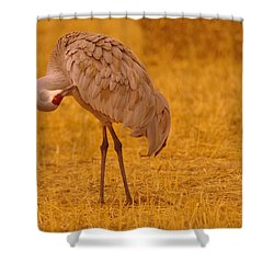 Sandhill Crane Preening Itself Shower Curtain by Jeff Swan