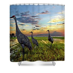 Sandhill Sunset Shower Curtain by Debra and Dave Vanderlaan