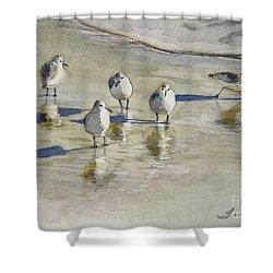 Sandpipers 2 Watercolor 5-13-12 Julianne Felton Shower Curtain by Julianne Felton