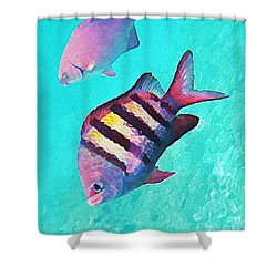 Sargeant Fish Shower Curtain by John Malone