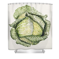 Savoy Cabbage  Shower Curtain by Alison Cooper
