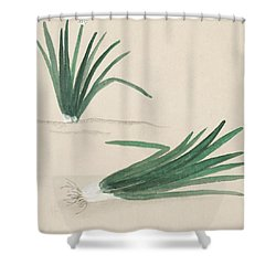 Scallions Shower Curtain by Aged Pixel