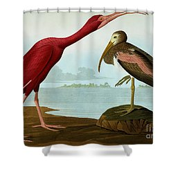 Scarlet Ibis Shower Curtain by John James Audubon